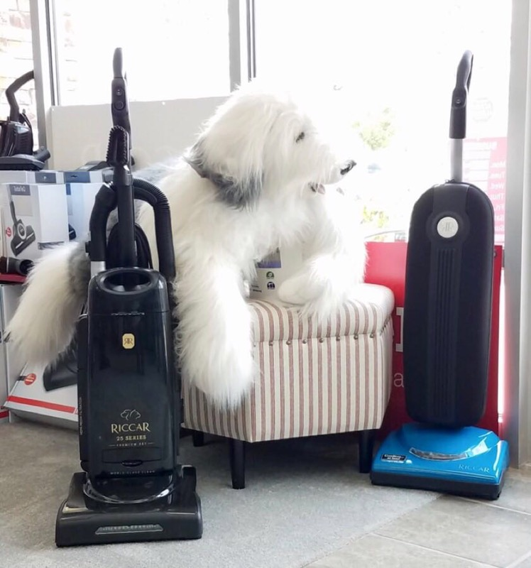 vacuum-dog-vac-city